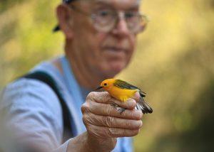 Bob Sargent Bird Banding Project Alabama