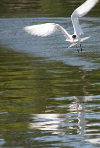 Coastal Wildlife Photo Tips