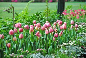 Spring at Bellingrath Gardens